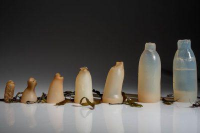 可生物分解的容器 真的比較好嗎?