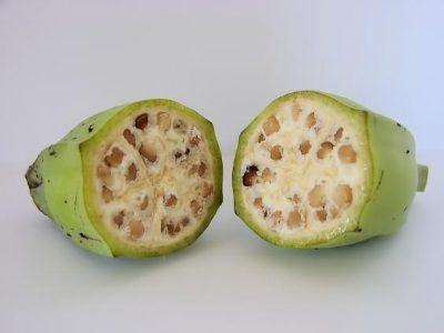 人類培育前,蔬果長什麼樣?