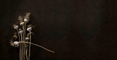 主廚眼裡的珍寶:傳承一世紀的大蒜
