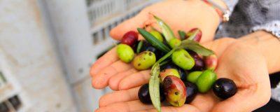 在這裡,幾乎每戶人家都自己做橄欖油