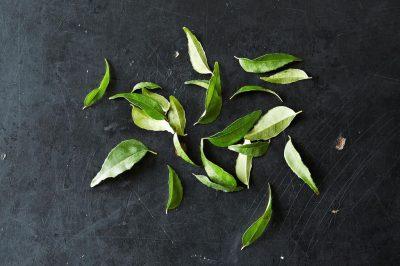 來自南亞的香料:咖哩葉入門課