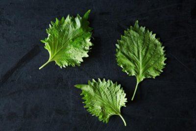 被喻為蔬菜界的維他命:紫蘇