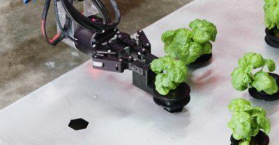 餐盤上的綠色蔬菜,將由機器人採摘?