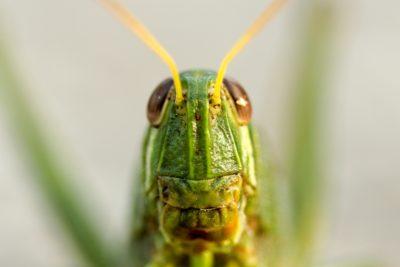 未來的零食將用昆蟲製成?百事公司徵集新蛋白質來源