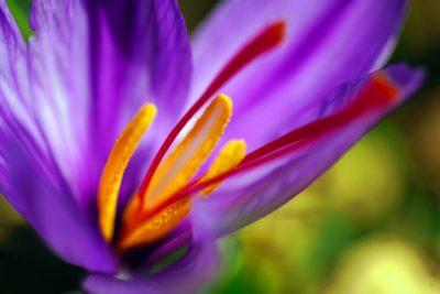 帶有印度皇室色彩的番紅花:教你怎麼在家萃貴族 Kahwa 茶
